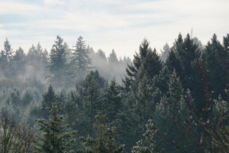 misty-morning-across-forest