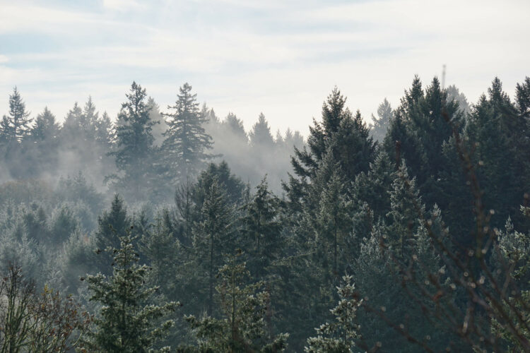 misty-morning-across-forest